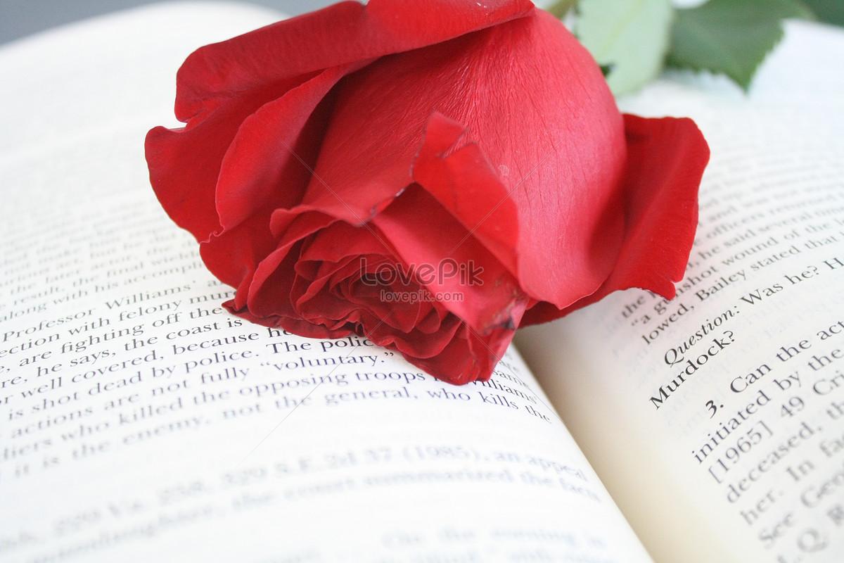 书本上的鲜花图片素材编号153097_高清图片免费下载