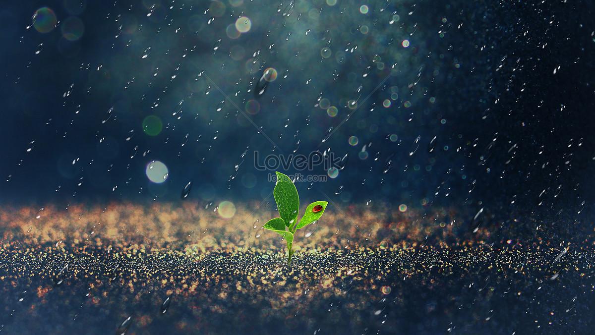 雨天从土地裏长出的嫩芽图片素材编号500387031_prf