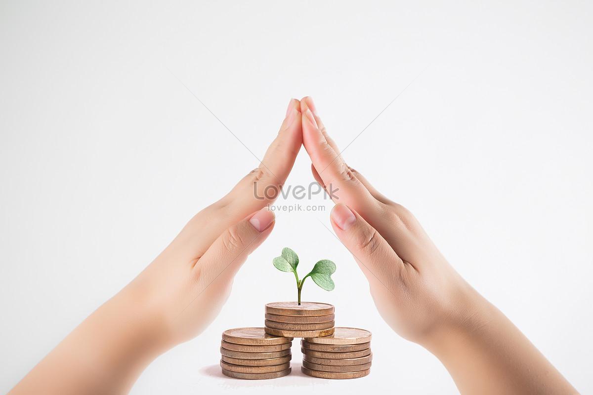 双手呵护钱币上生长的幼苗图片素材编号500439529_prf