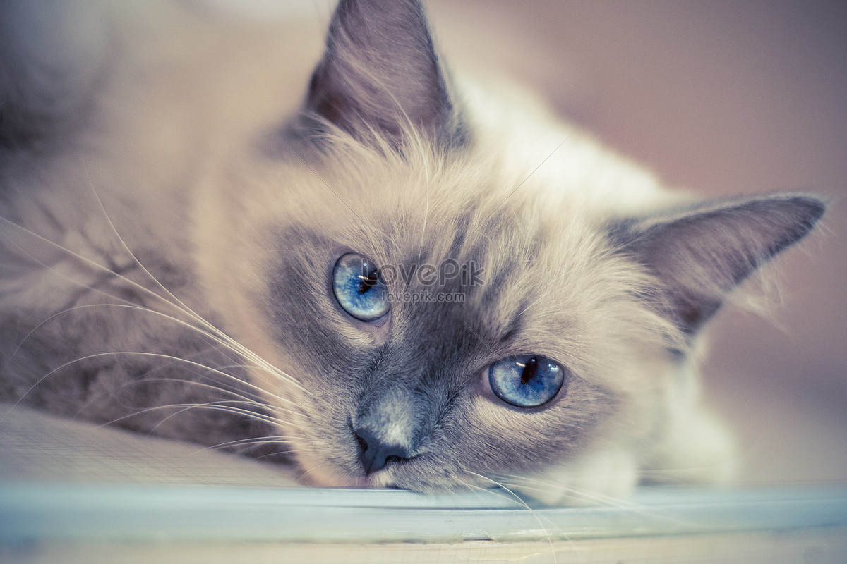 可爱的宠物猫