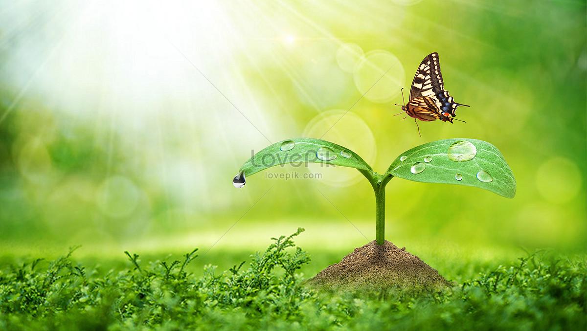 春天发芽植物和蝴蝶壁纸