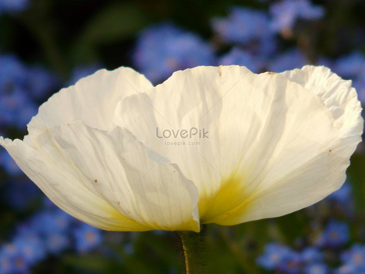 A beautiful white flower in the park photo imagepicture free a beautiful white flower in the park izmirmasajfo