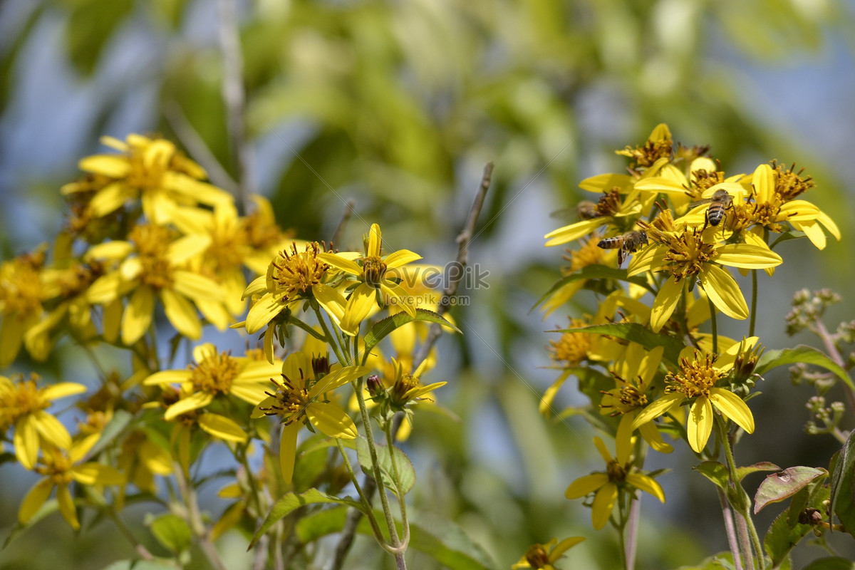 Small Yellow Flowers In Full Bloom Photo Imagepicture Free Download