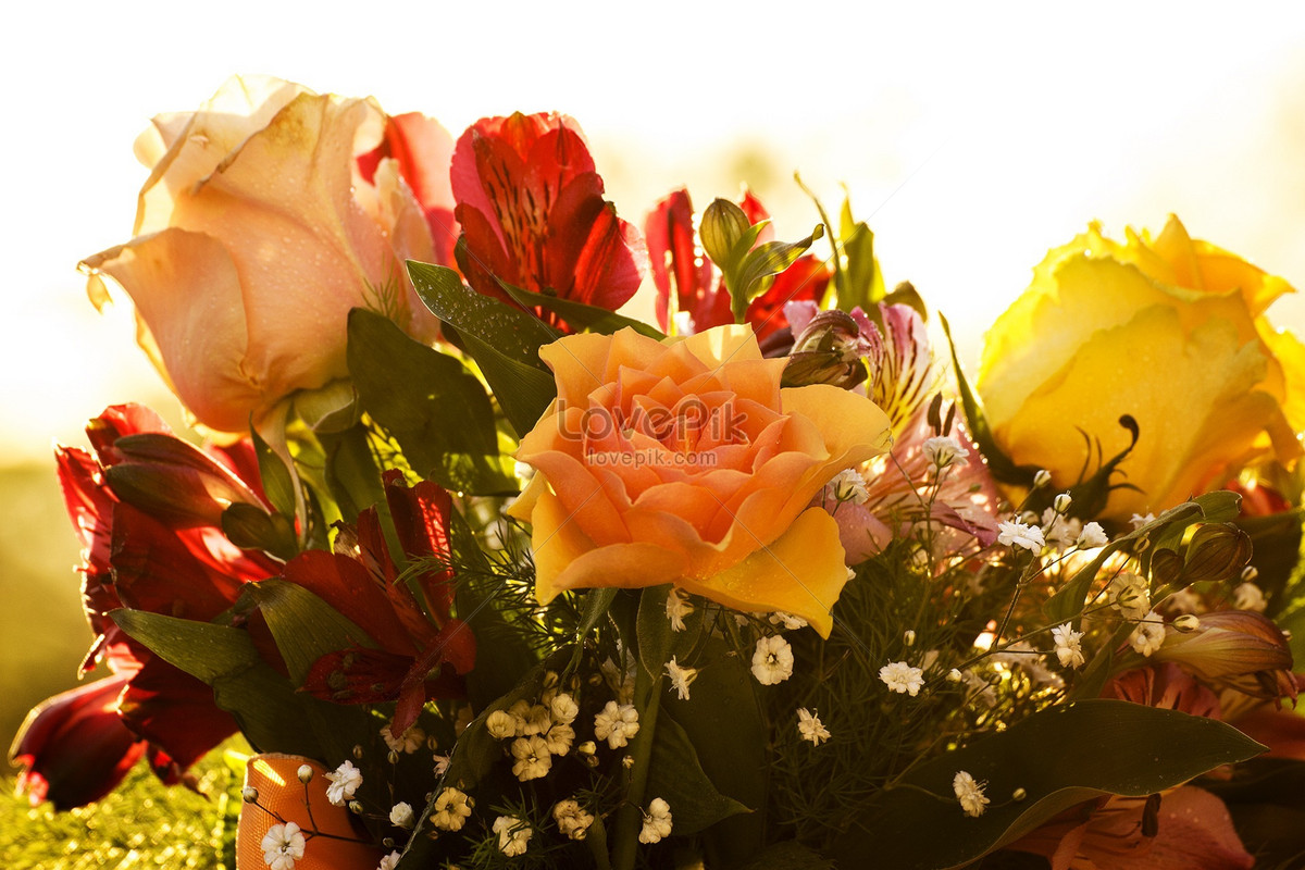 Beautiful Bright Flowers Photo Imagepicture Free Download