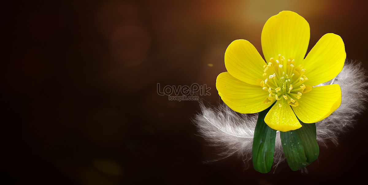 The small yellow flowers in the story photo imagepicture free the small yellow flowers in the story mightylinksfo