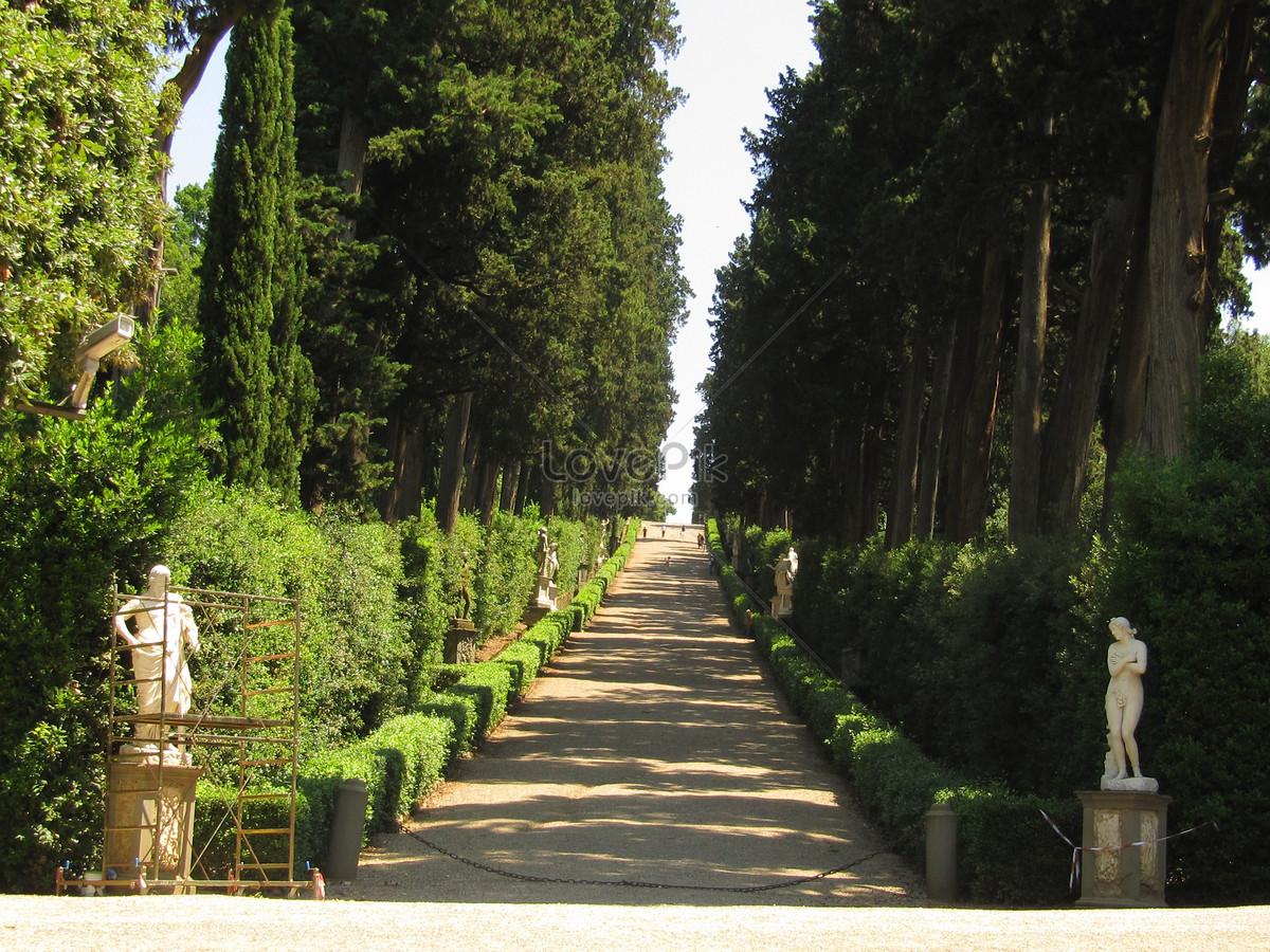 jalan setapak pohon