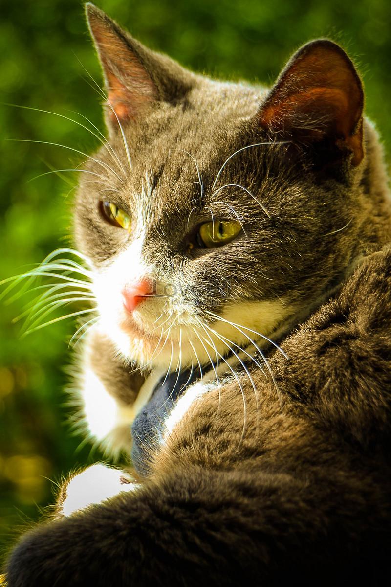 Ánh mắt buồn phiền mèo con