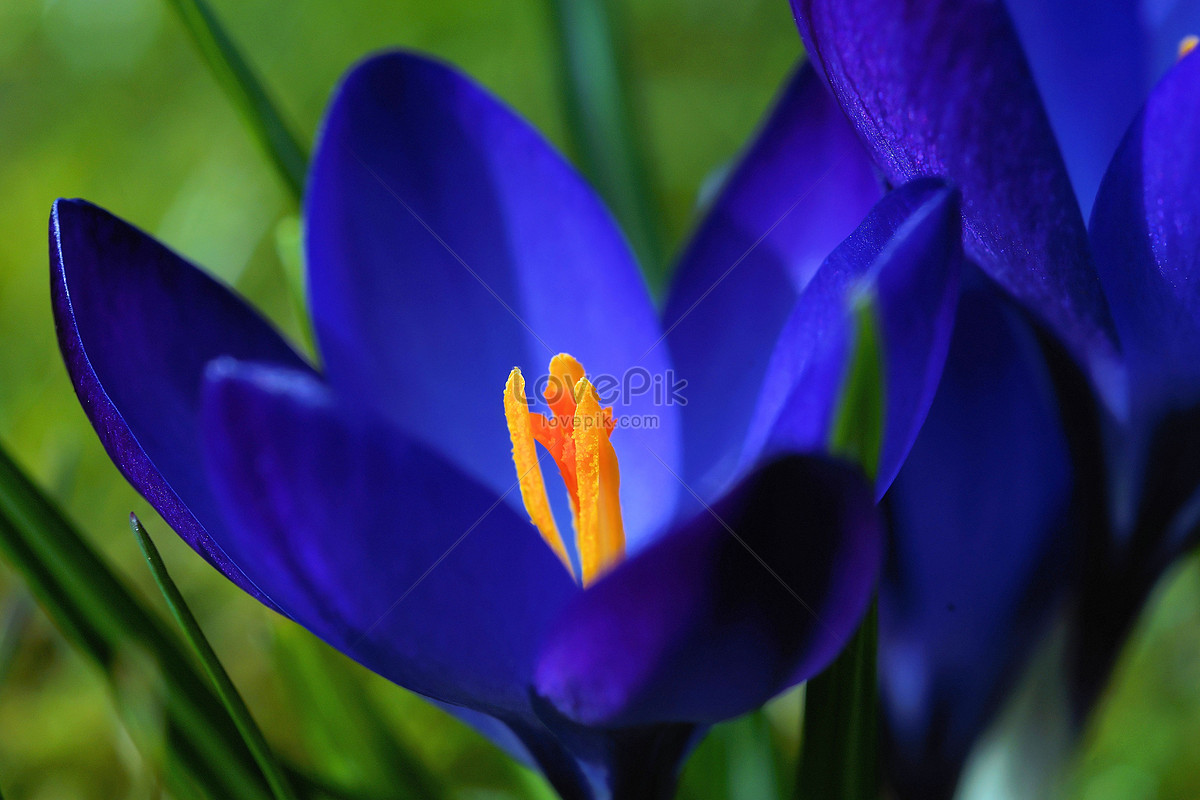 Beautiful Blue Flowers Photo Imagepicture Free Download