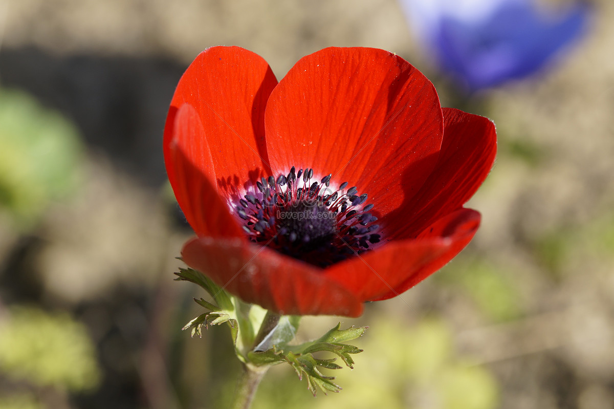 Beautiful red flowers photo imagepicture free download beautiful red flowers izmirmasajfo