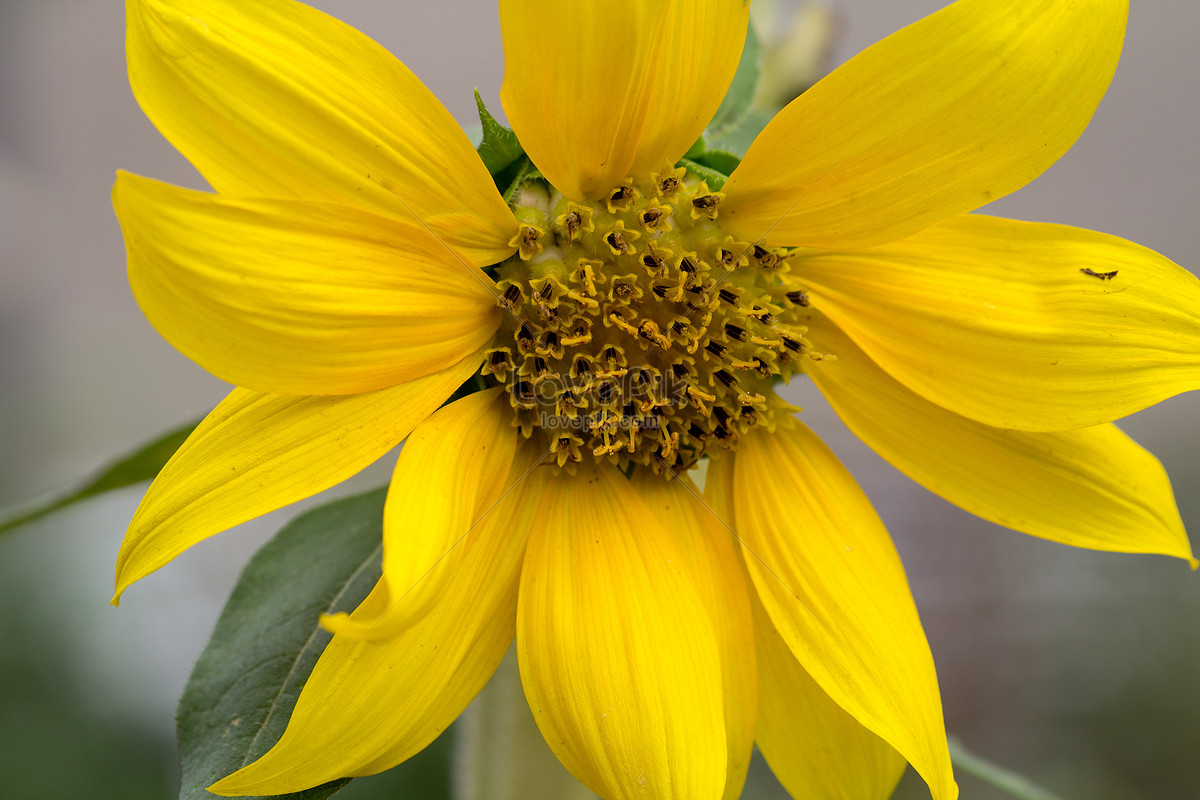 Beautiful yellow flowers photo imagepicture free download beautiful yellow flowers izmirmasajfo