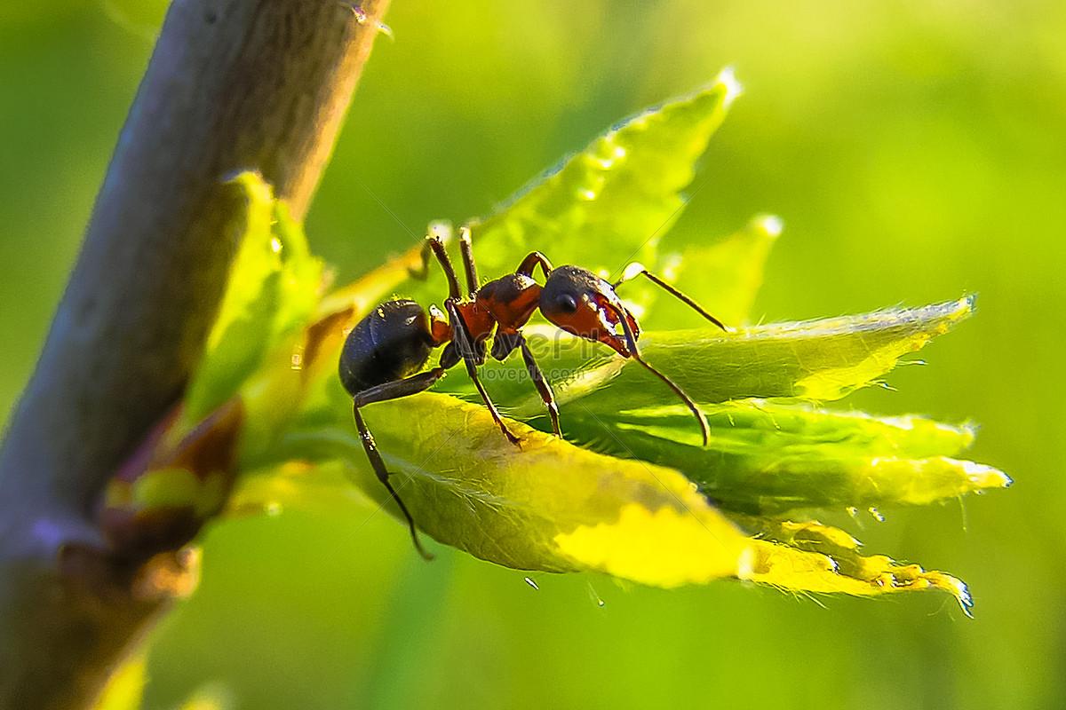 Image result for चींटियाँ