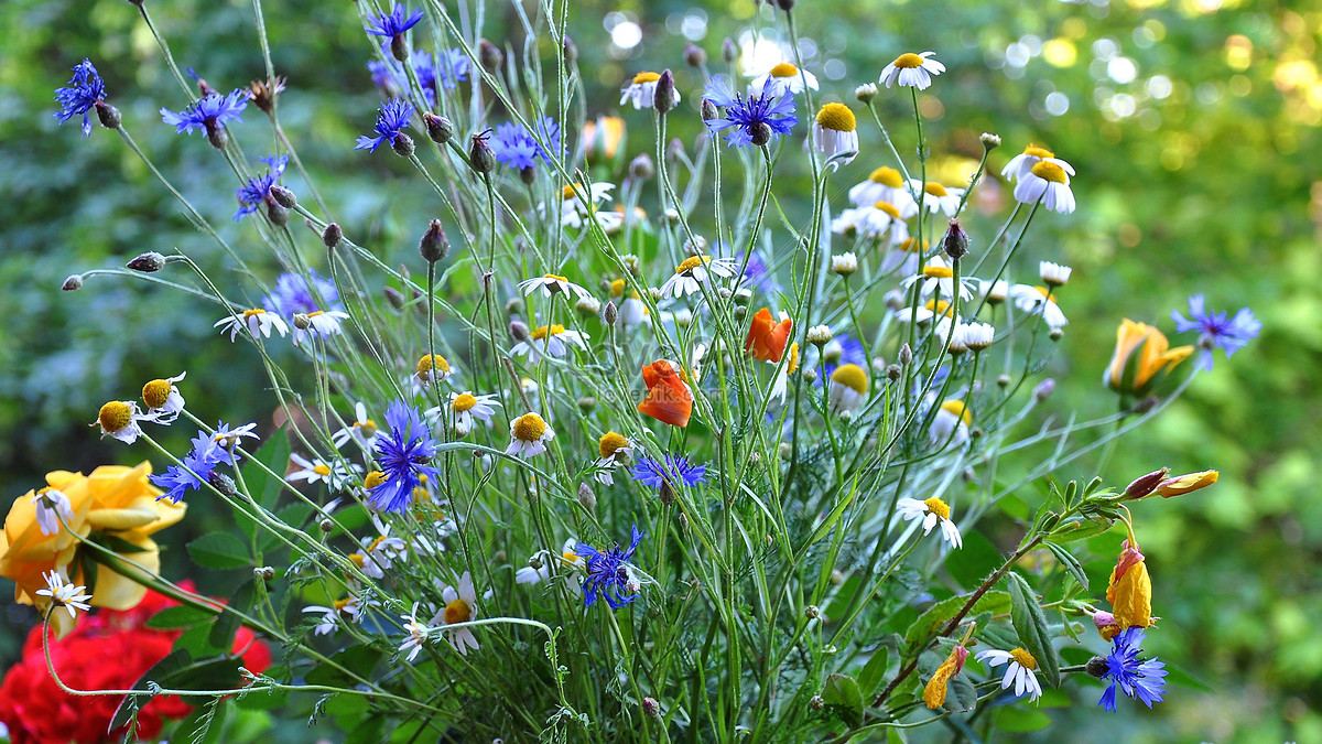 Beautiful wild flowers photo imagepicture free download beautiful wild flowers izmirmasajfo