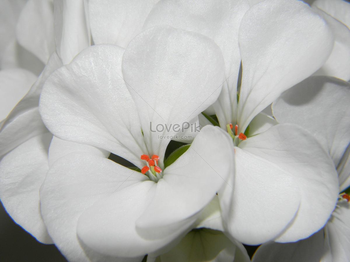 Hermosas Flores Blancas Imagen Descargar Foto 207895 Jpg Imagen