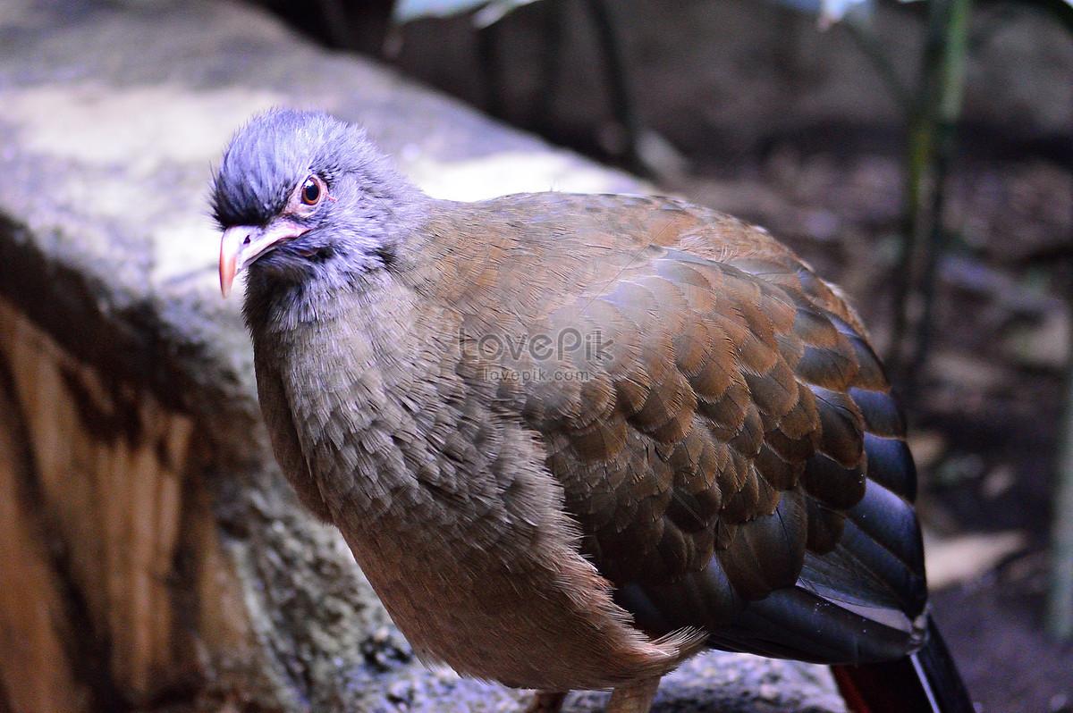 80+ Foto Gambar Burung Merpati Liar HD