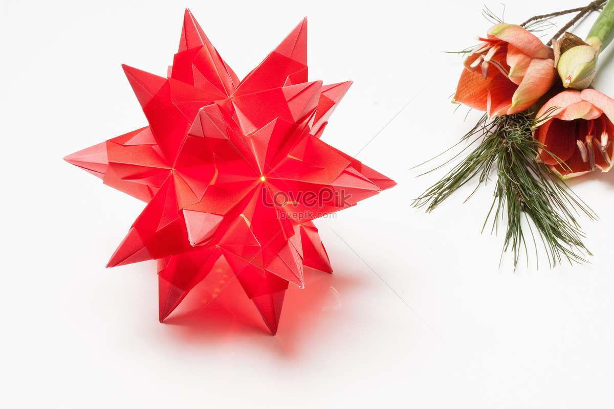 Beautiful Origami Poinsettia Photo Imagepicture Free Download