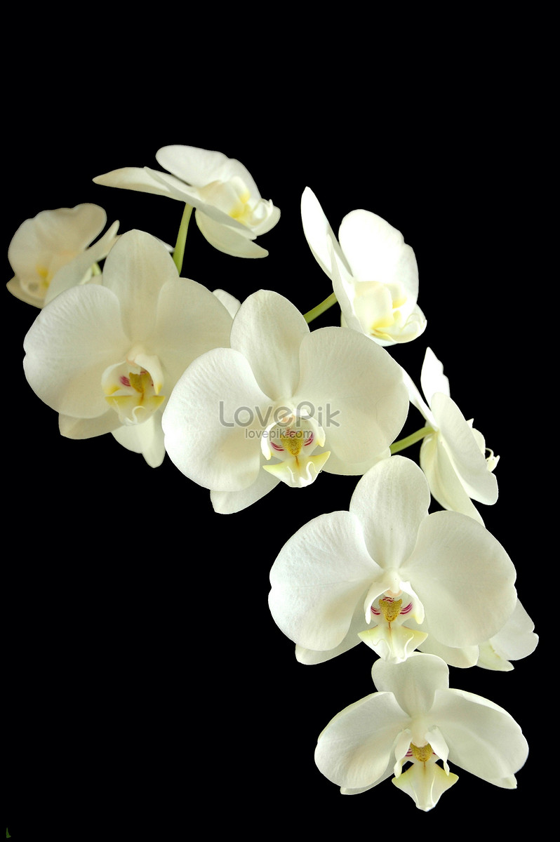 The White Flowers In The Dark Photo Imagepicture Free Download