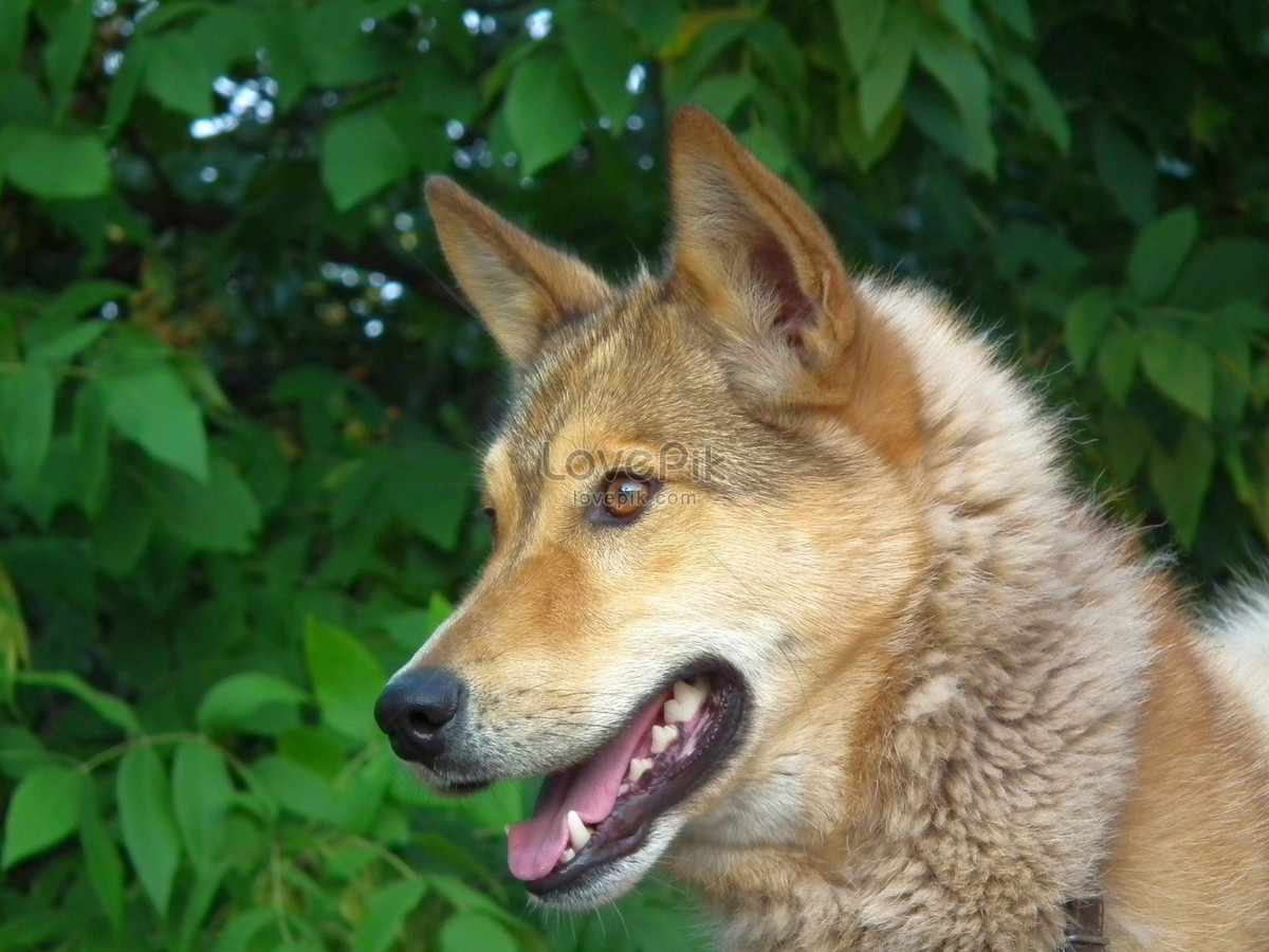 A Beautiful Dog Photo Image Picture Free Download 244041 Lovepik Com