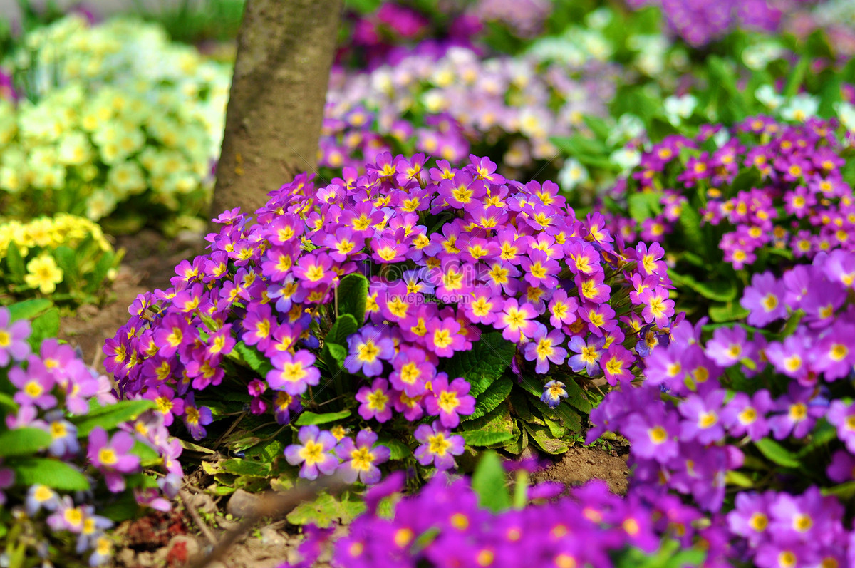Beautiful spring flowers photo imagepicture free download beautiful spring flowers izmirmasajfo
