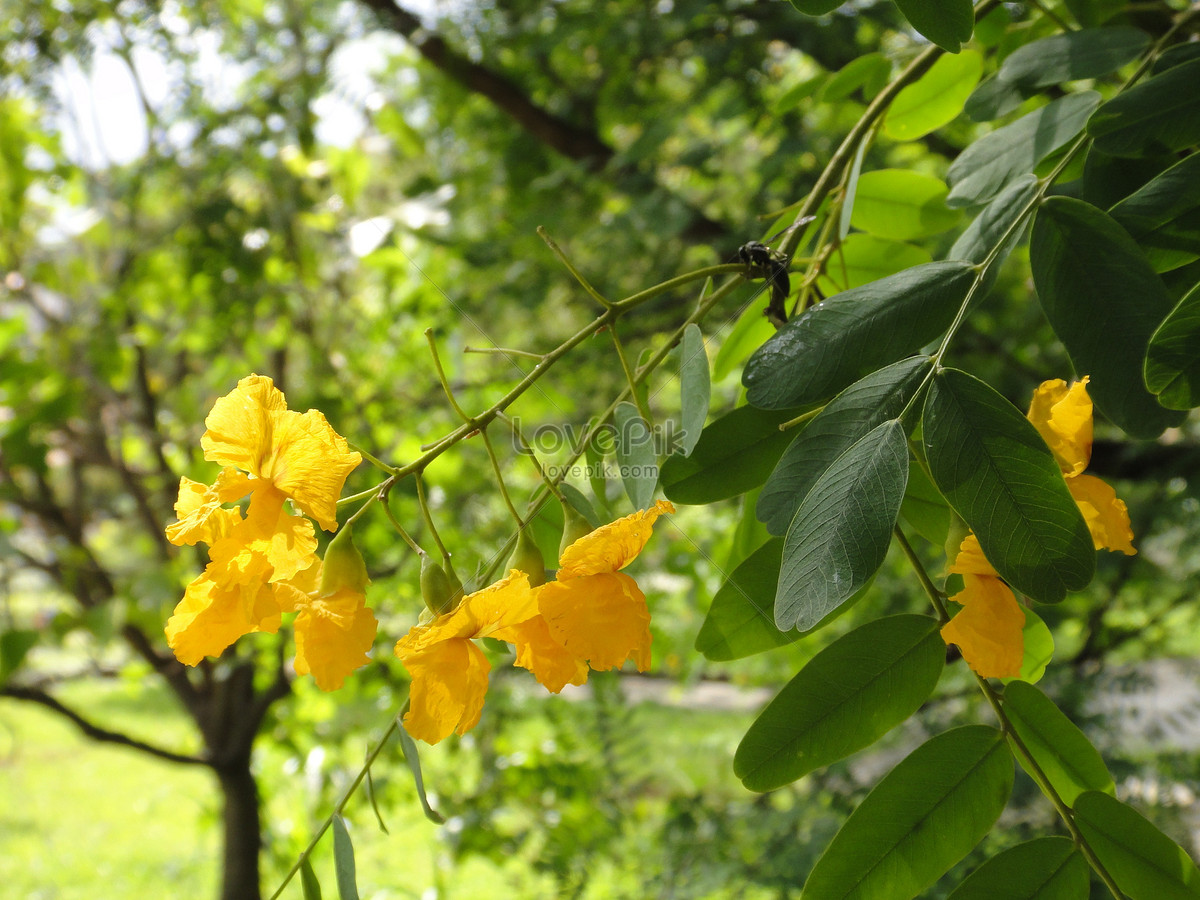 Photo De Arbre Fleur Jaune Numero De L Image263668 Format D Image