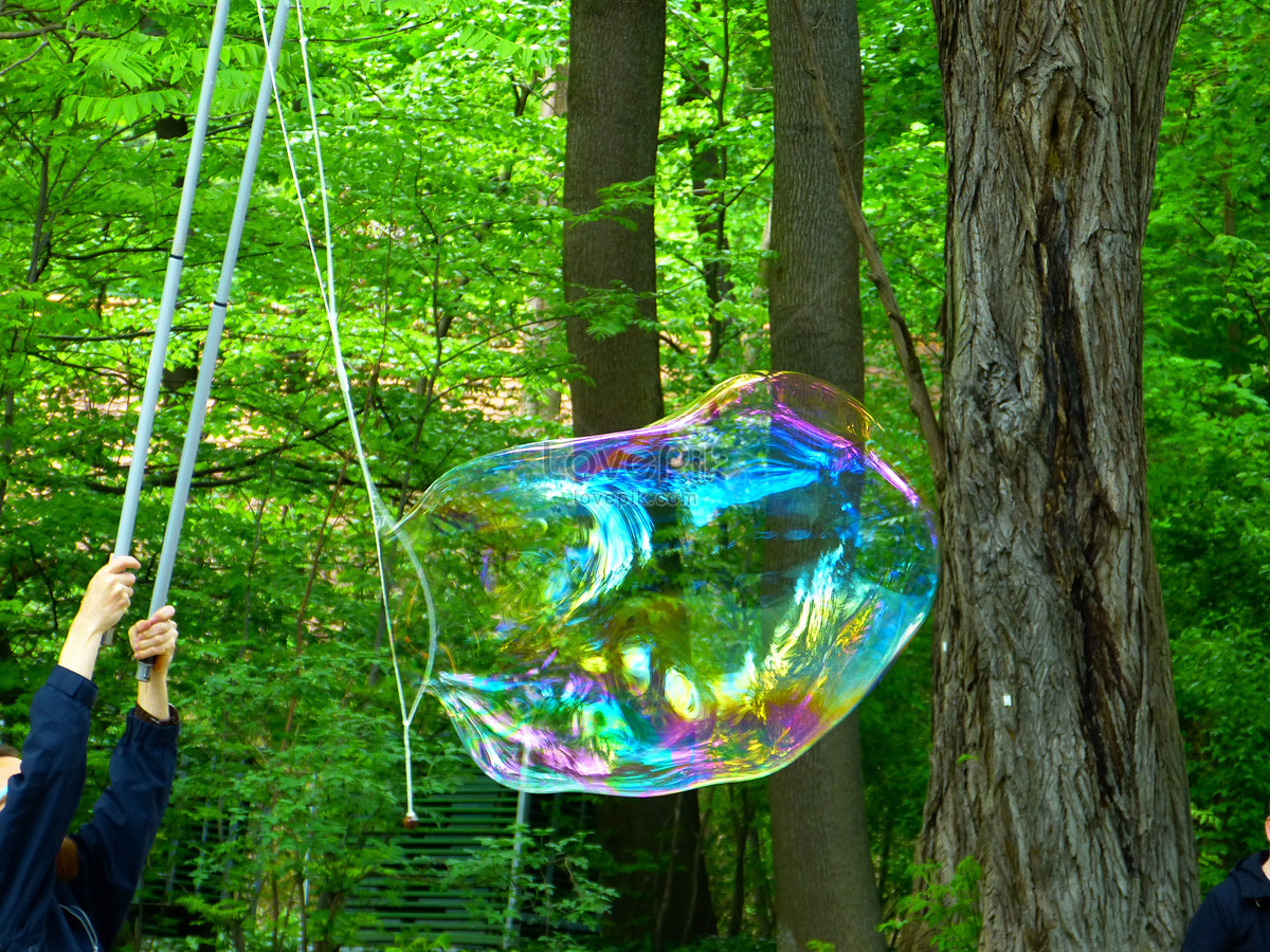 Color bubbles under the shade of a tree photo image_picture free ...