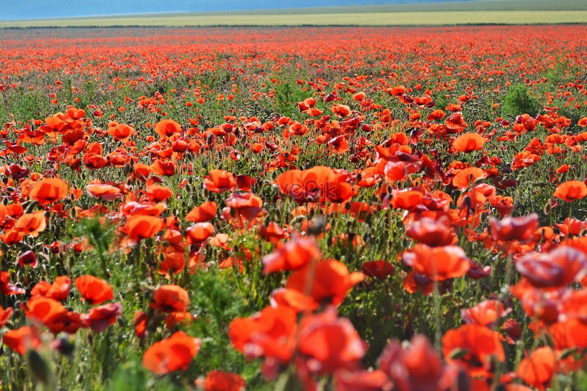 Beautiful wild flowers photo imagesnature pictures id289154lovepik beautiful wild flowers izmirmasajfo