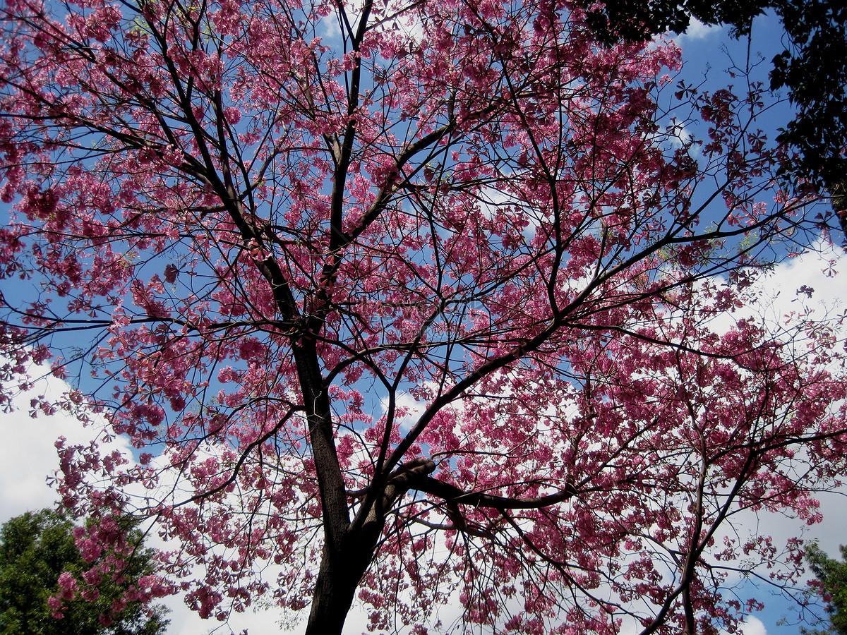 photo de un arbre fleur sous le ciel bleu_numéro de l