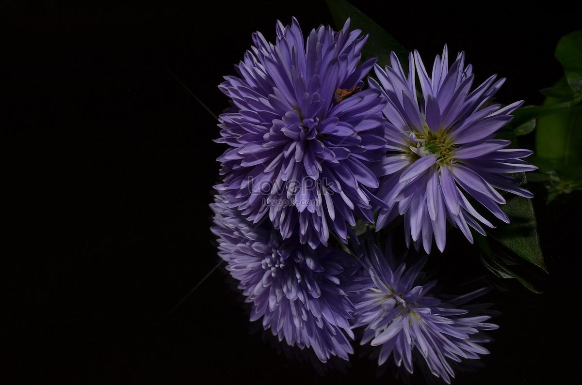 Màu Tím Của Hoa Tươi đẹp Hình ảnh định Dạng Hình ảnh Jpg