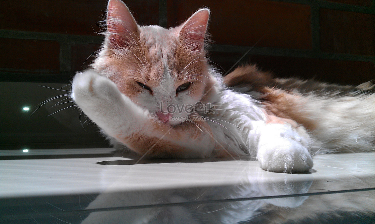 Unduh 99+ Gambar Kucing Indah Terbaru Gratis