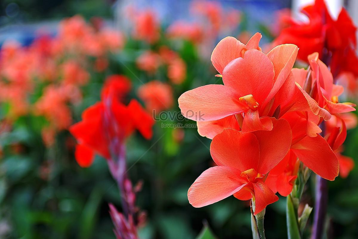 Güneş Altında çiçek Açan çiçekler Resimfotoğraf Numarası 348500tr