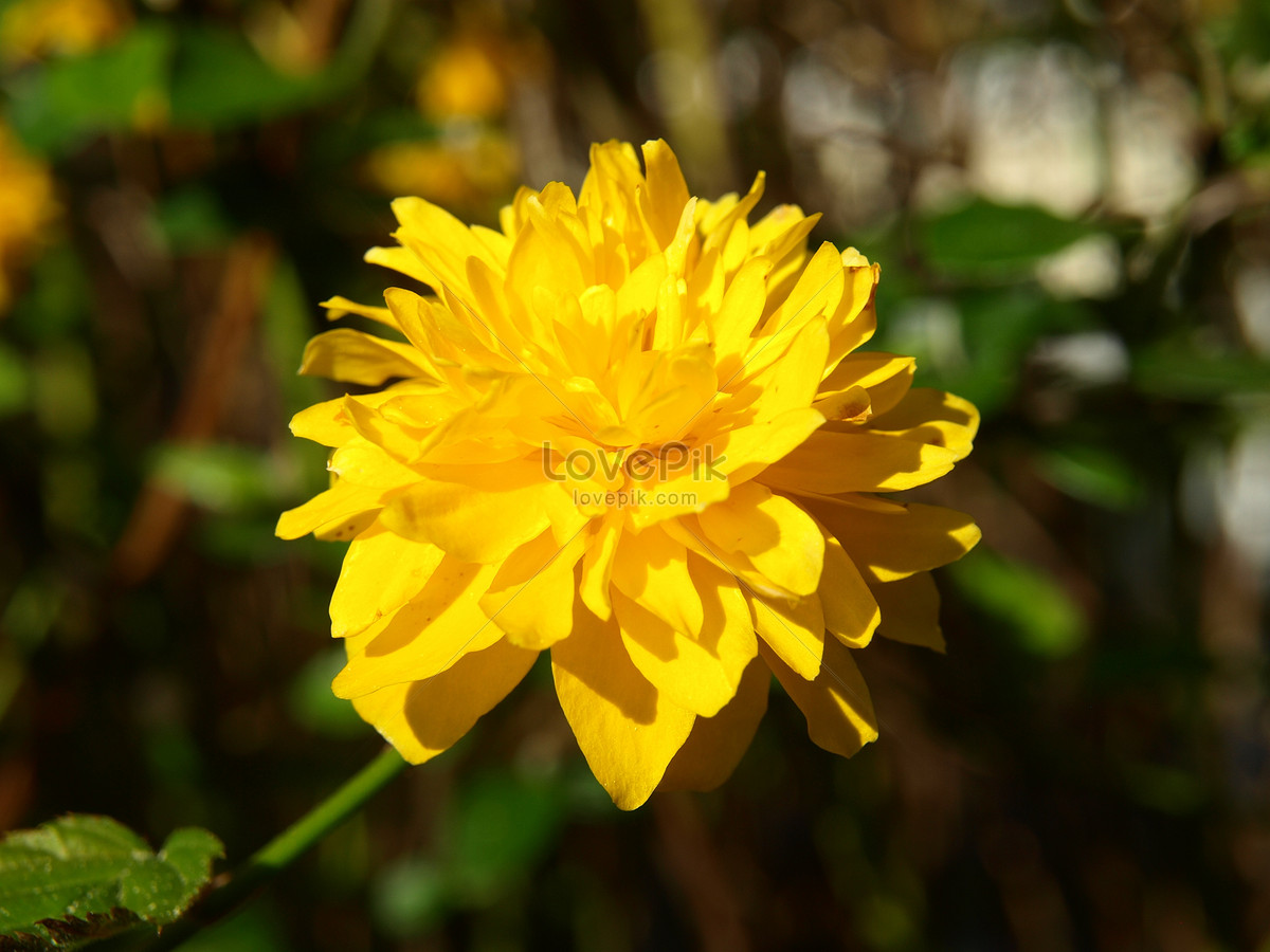 Bright yellow flowers photo imagepicture free download bright yellow flowers mightylinksfo