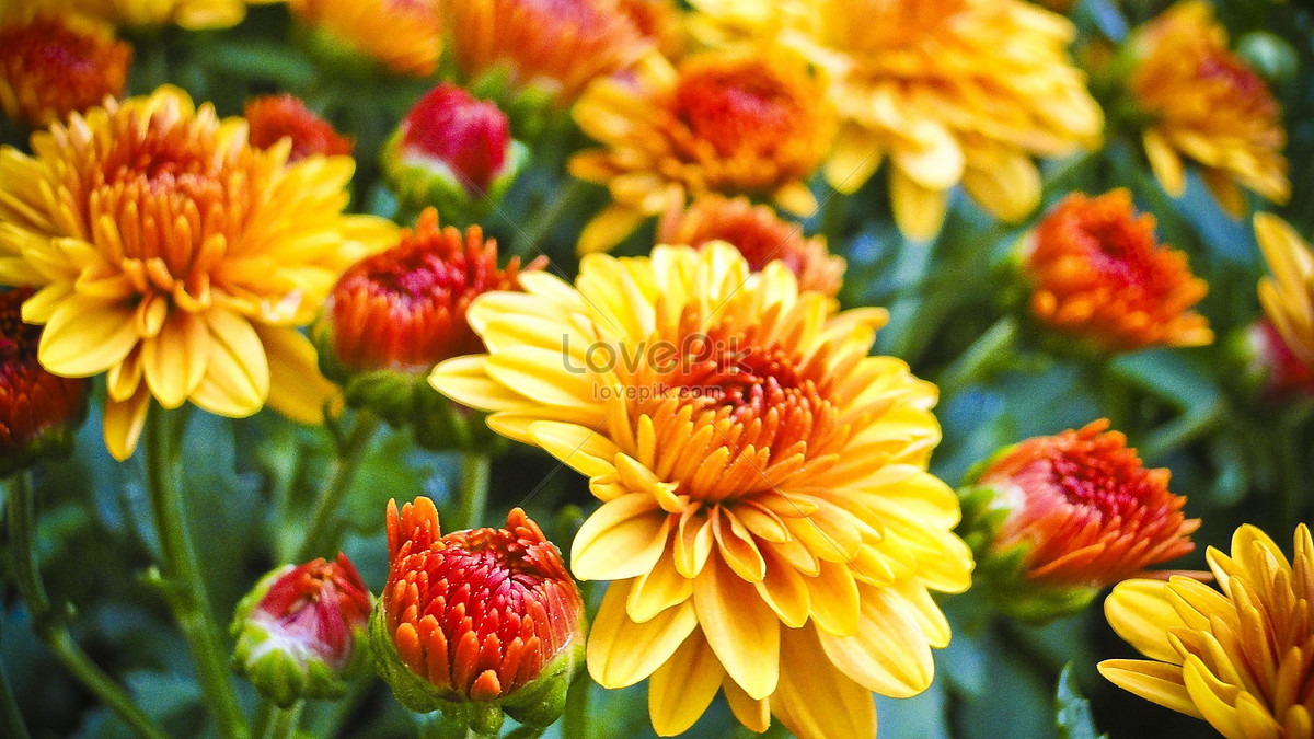 Bright And Beautiful Flowers Photo Imagepicture Free Download