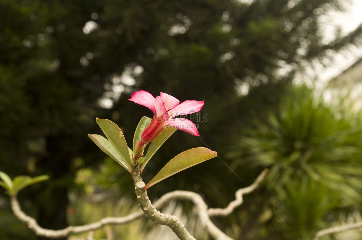 Beautiful tropical flowers photo imagesnature pictures id377248lovepik beautiful tropical flowers izmirmasajfo