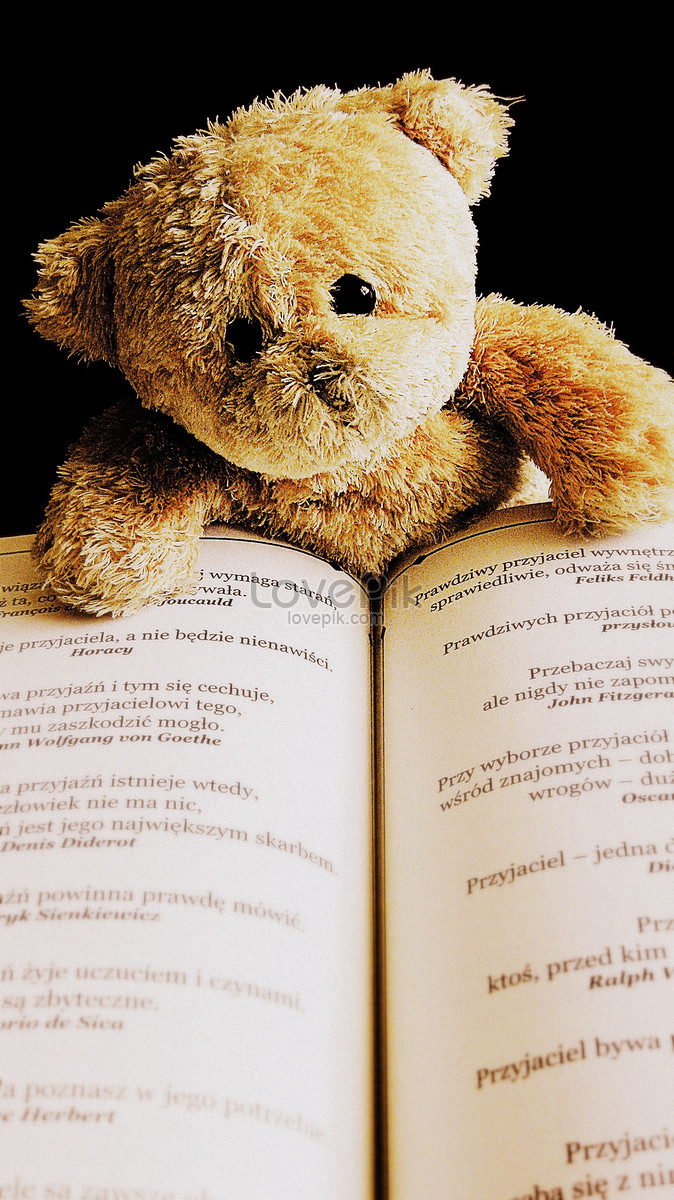 teddy bear reading books photo image picture free download