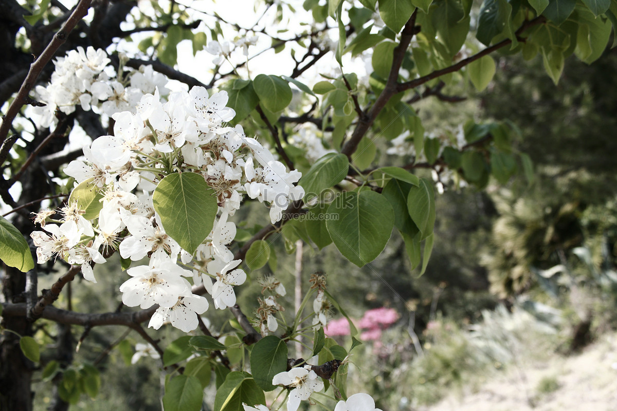 A Small White Flower In The Tree Photo Imagepicture Free Download