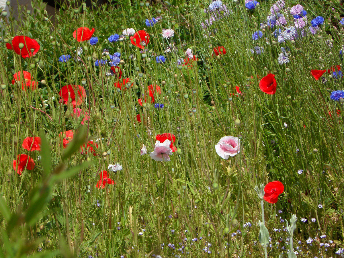 Beautiful Wild Flowers Photo Imagepicture Free Download