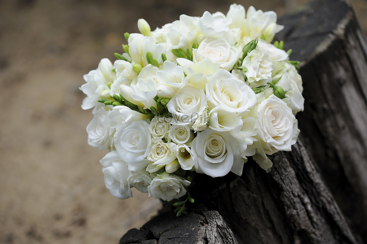 Fresh White Flowers Photo Imagepicture Free Download 425899lovepik
