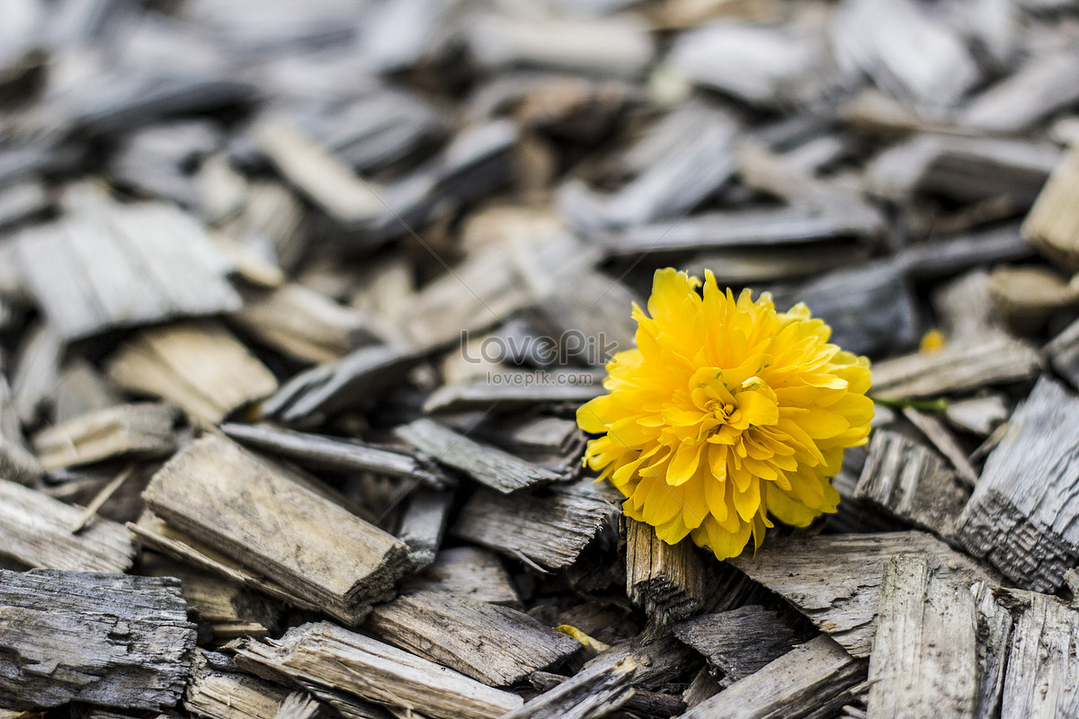 Beautiful Flowers On Wood Photo Imagepicture Free Download