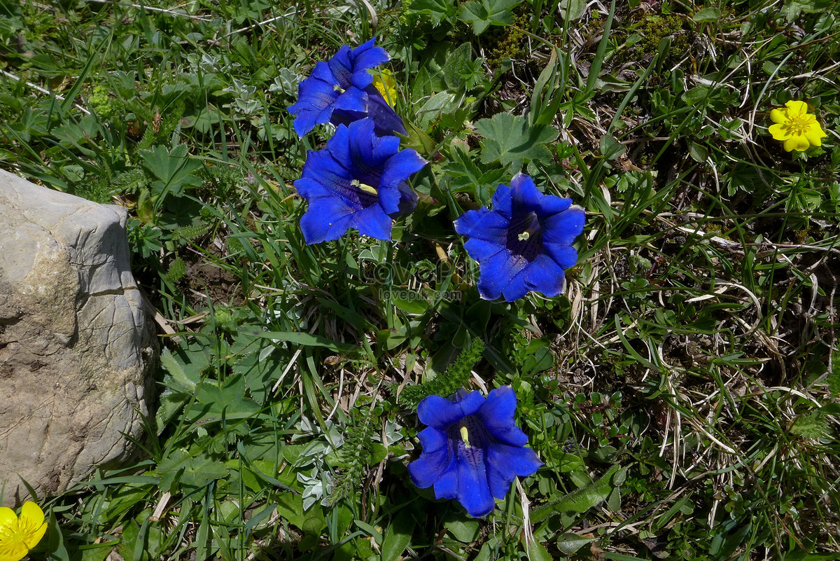 Beautiful blue flowers in the suburbs photo imagepicture free beautiful blue flowers in the suburbs izmirmasajfo