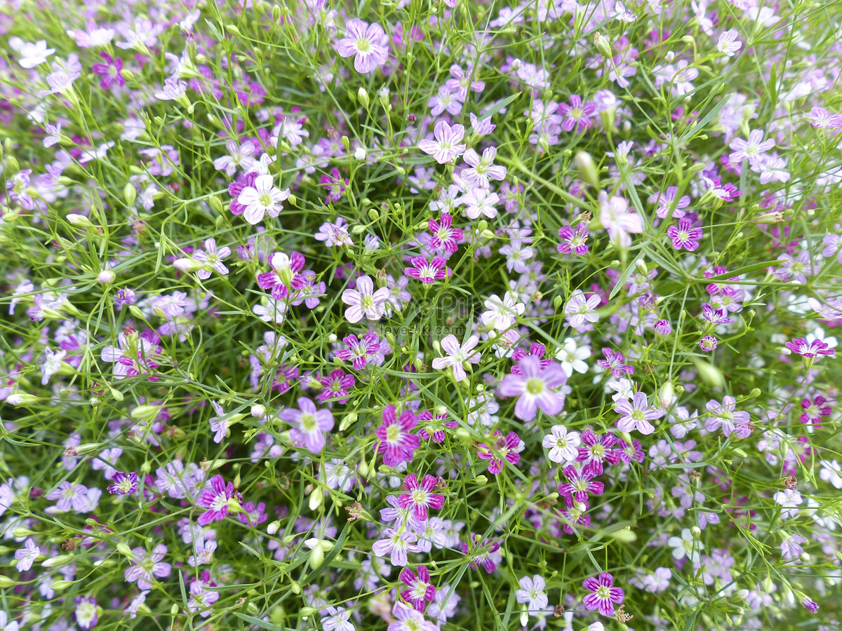 Small Purple Flowers In The Grass Photo Imagepicture Free Download