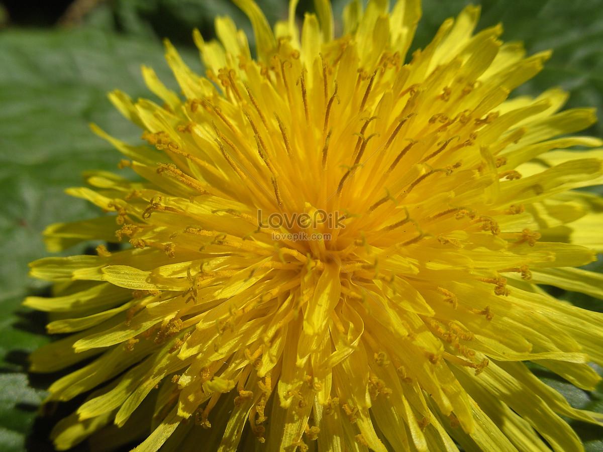 Flores Amarillas Silvestres Imagen Descargar Foto 507230 Jpg Imagen