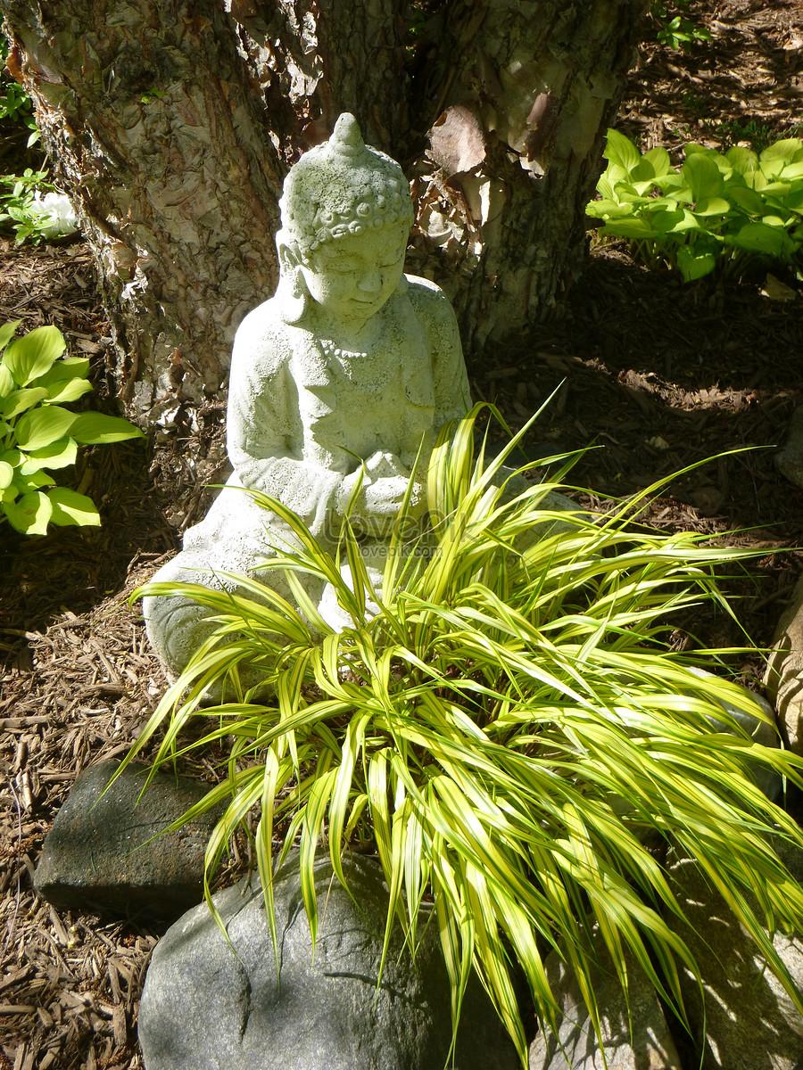 rễ cây bàng màu trắng tượng