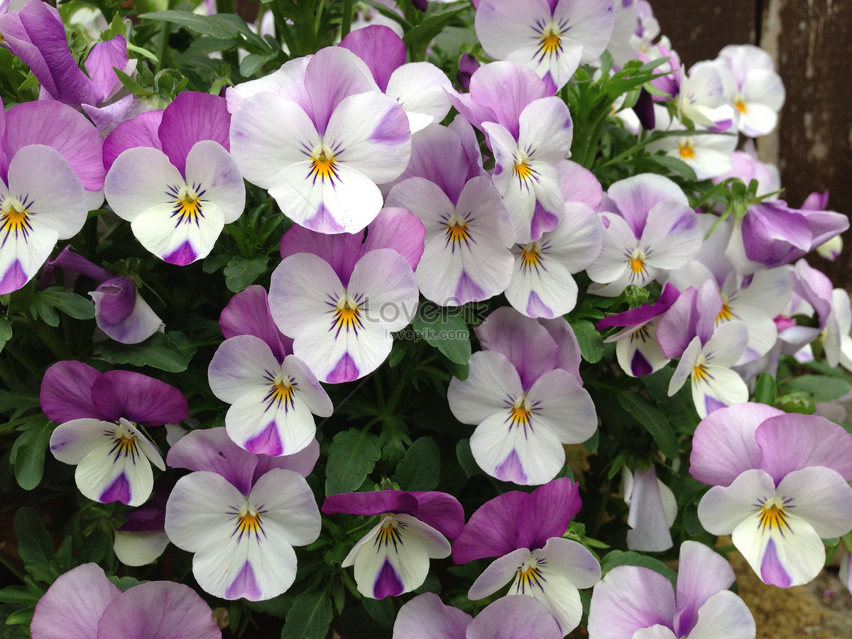 Small Purple And White Flowers Photo Imagepicture Free Download