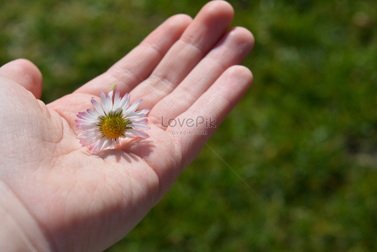flowers in the palm of the hand photo image picture free download