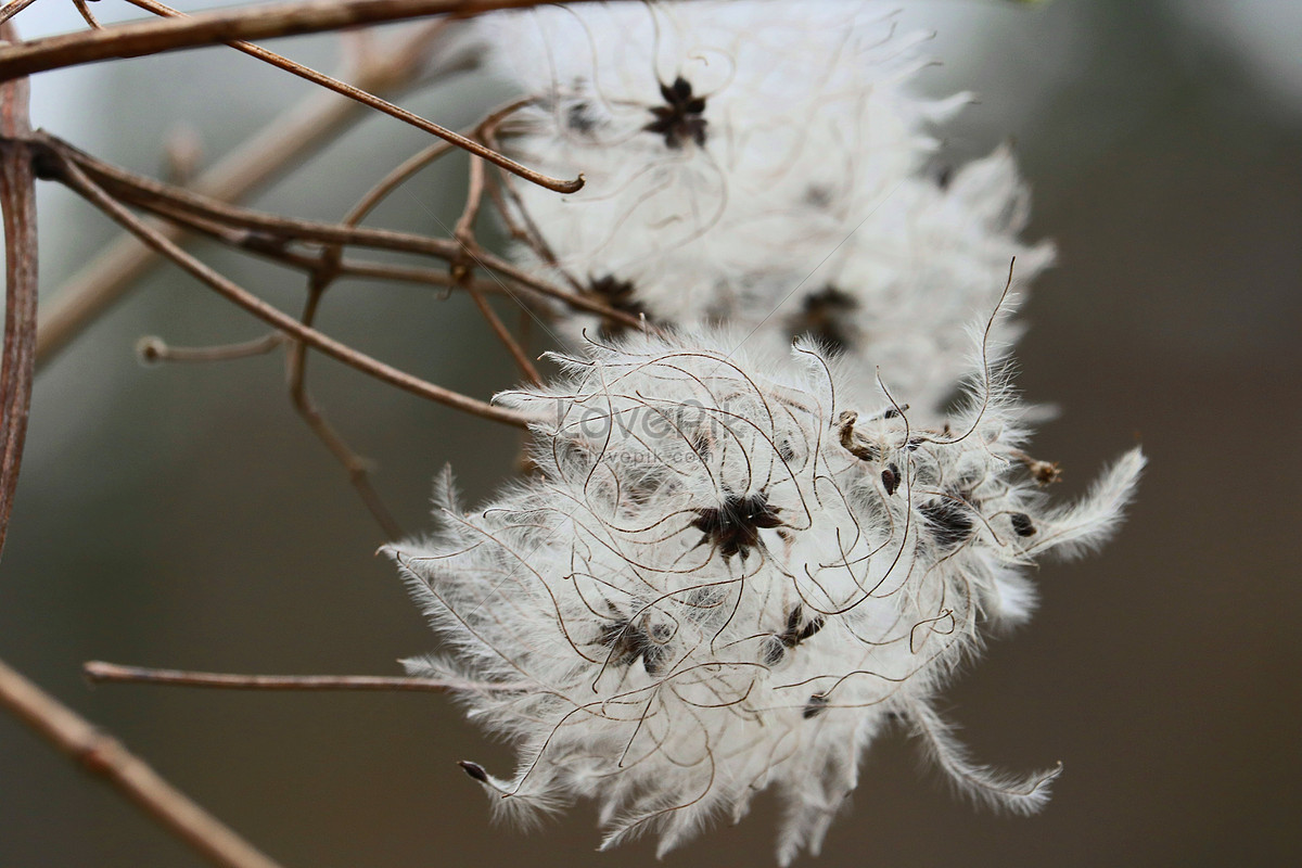 A Wild White Forest Flower Photo Imagepicture Free Download
