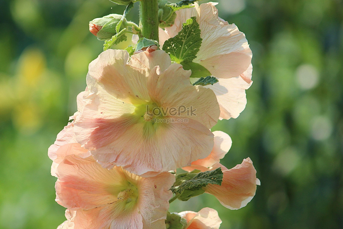 Vines Grown On Pink Flowers Photo Imagepicture Free Download