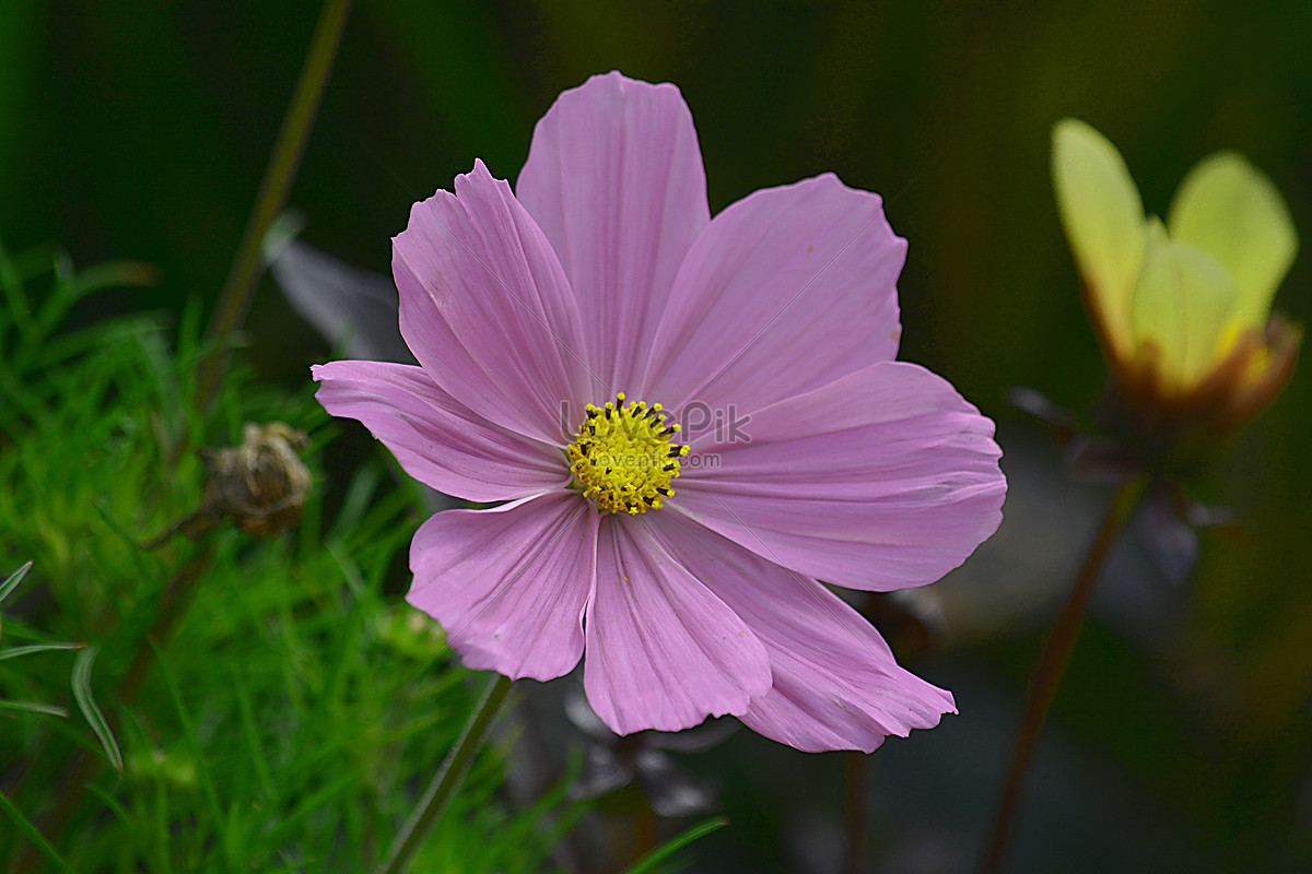Beautiful natural flowers photo imagepicture free download beautiful natural flowers izmirmasajfo