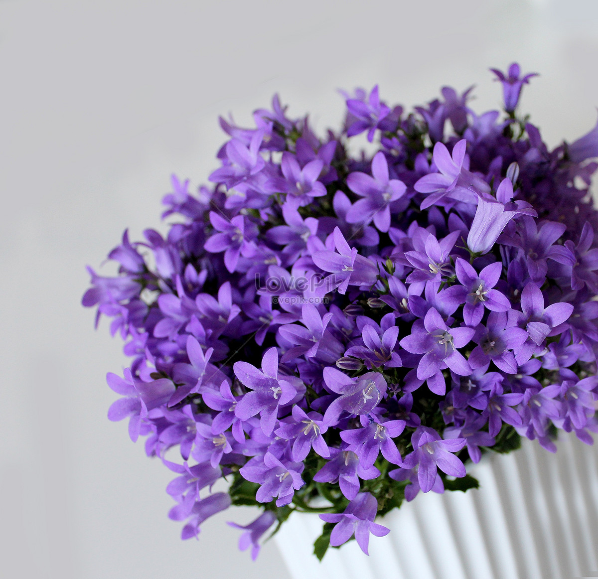 A purple flower bouquet in a white background photo image_picture ...