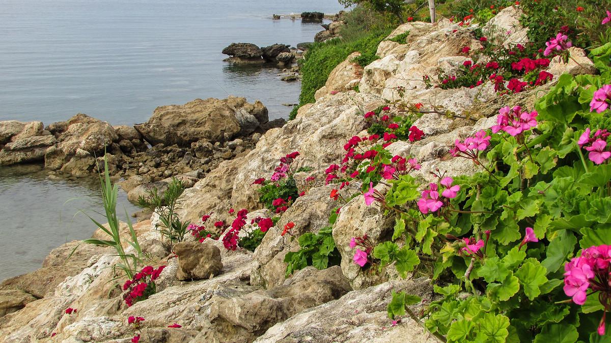 Bãi Biển Trên Một Bông Parviflora