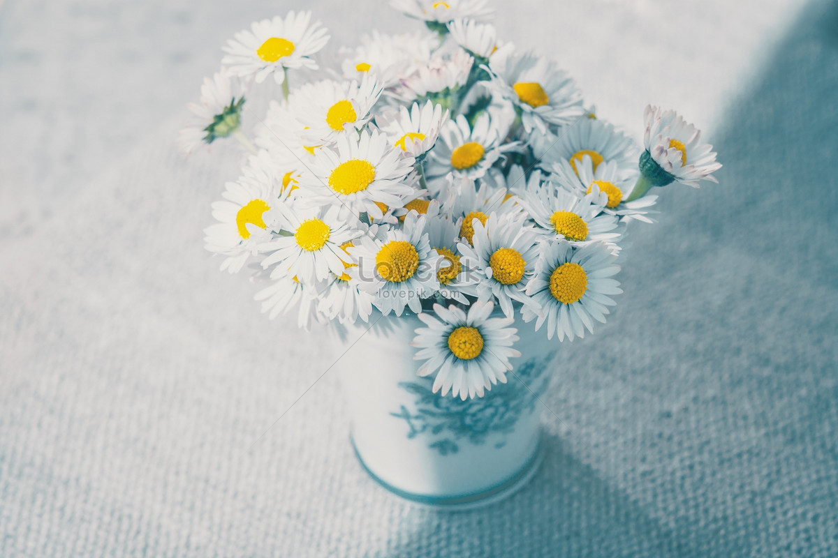 Elegant and quiet little daisy photo imagepicture free download elegant and quiet little daisy izmirmasajfo