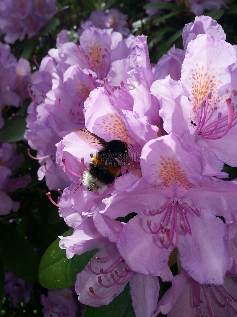 A Cluster Of Light Purple Flowers Photo Imagepicture Free Download
